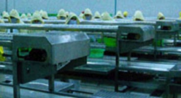 Food Conveyor Sytems