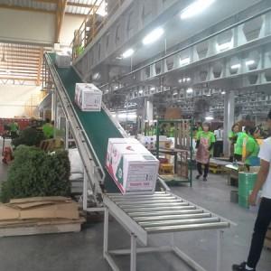 สายพานลำเลียงพียู (PVC Belt Conveyor)