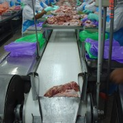 สายพานลำเลียงพีวีซี (PVC Belt Conveyor)
